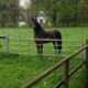 Ausbildung Junger Pferde Abwechslung