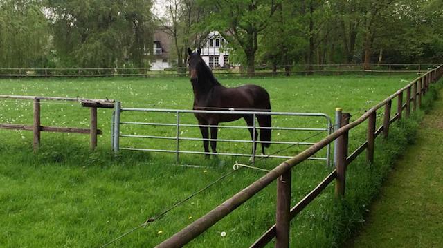 Arbeit mit jungen Pferden Teil 1