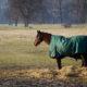 Pferdedecken imprägnieren