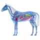 Verdauungsapparat des Pferdes