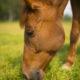 Fotolia / Proteine für das Pferd