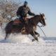 Fotolia/Westernreiten: Die traditionelle Reitweise der Cowboys
