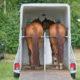 Fotolia / Verladetraining mit dem Pferd