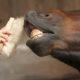 Fotolia / Pferde Zahnpflege