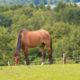 Fotolia / Pferdehaltung im Offenstall