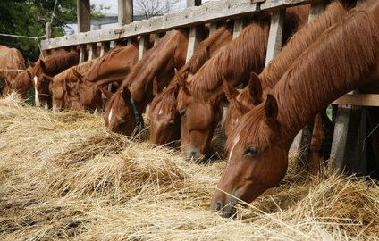 Fotolia / Kohlenhydrate für das Pferd