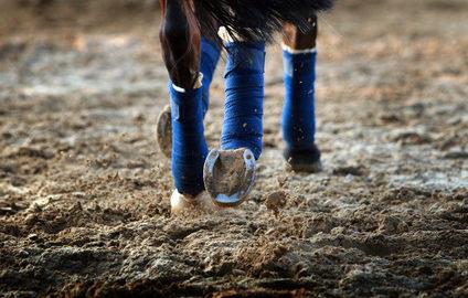 Der Weg zum Dressurpferd