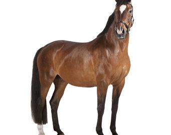 Fotolia / Horseware