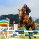 Fotolia / Horseware Apparel Katalog