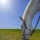 Fotolia / Wichtige Tipps für die artgerechte Pferdehaltung
