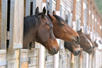 Fotolia / Was kostet mich ein Pferd monatlich?