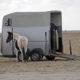 Fotolia / So transportiere ich mein Pferd sicher