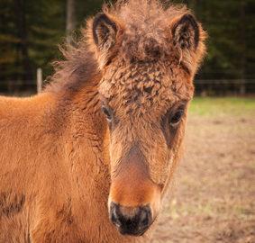 Fotolia / Fellwechsel beim Pferd