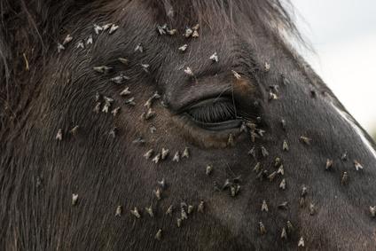 Mittel gegen fliegen bei pferden die besten m glichkeiten for Mittel gegen fliegen im blumentopf