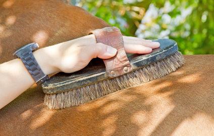 Fotolia / Grundausstattung Pflegezubehör für Pferde