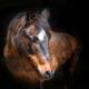 Alte Pferde gesund und fit halten