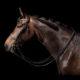 Trensen fürs Pferd