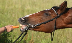 Leckerlis für Pferde
