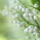 Die häufigsten Giftpflanzen auf der Weide