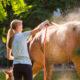 Pferdewäsche im Sommer – das ist wichtig: