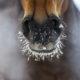 Winterausrüstung für das Pferd