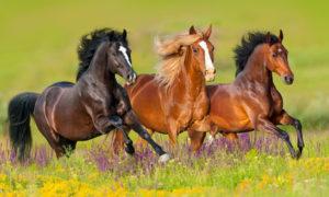 Pferd und Jagd 2017