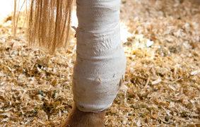 Was tun, wenn das Pferd lahmt?