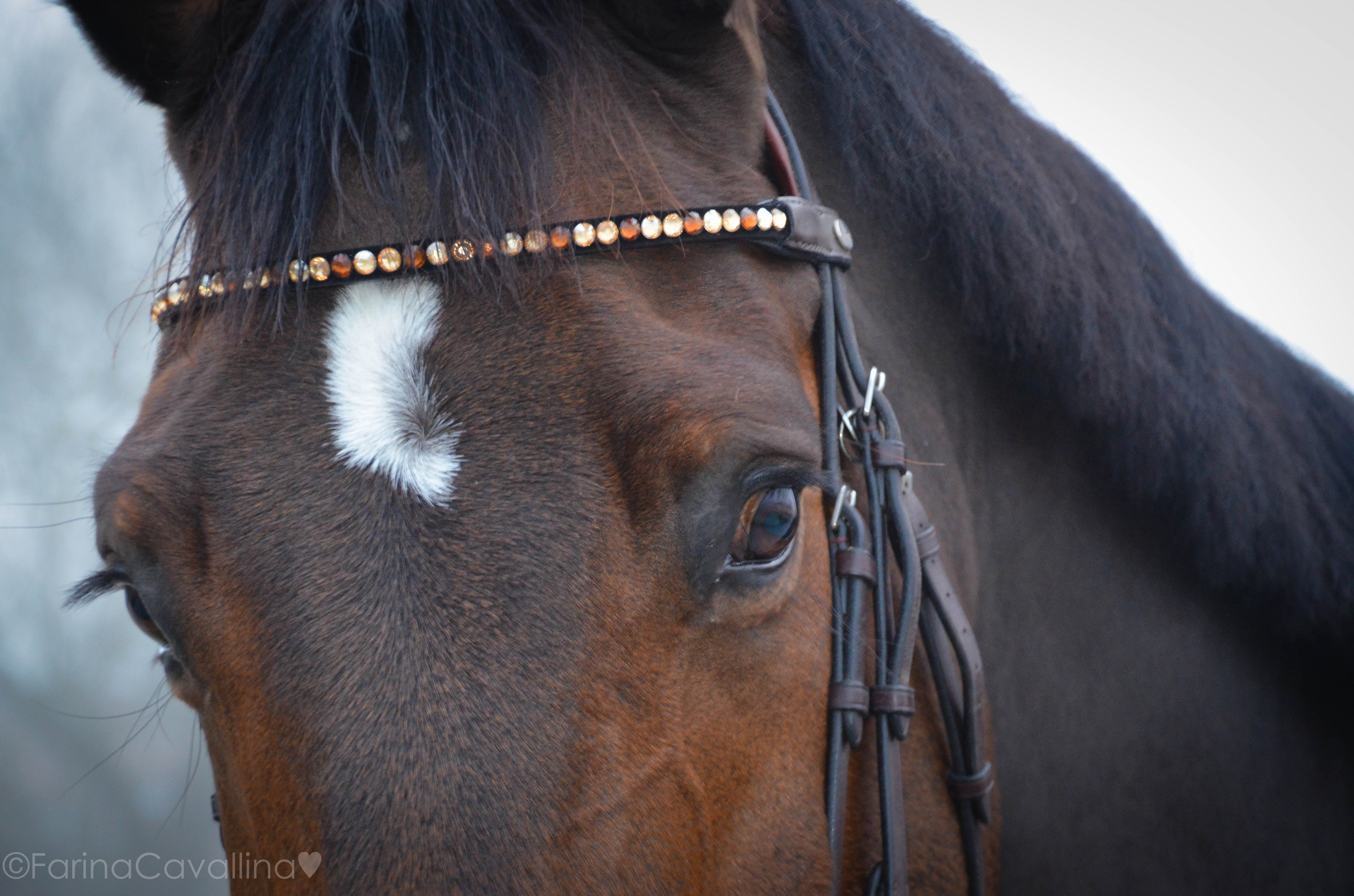 Weihnachtsgeschenke für das Pferd