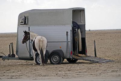 Fahren mit Pferdeanhänger