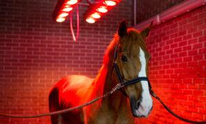 Pferdesolarium: Wie sinnvoll ist die Anschaffung?
