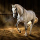 Rückenprobleme beim Pferd