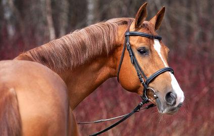 Magnetfelddecken für Pferde